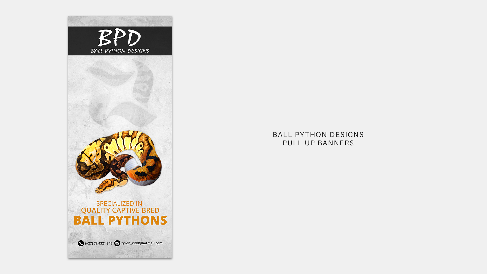 Ball Python Designs Pull Up Banner